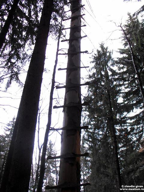 copacul scara