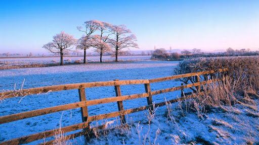 Frosty Countryside.jpg