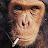 R Azucar avatar image