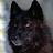 Andrew F avatar image