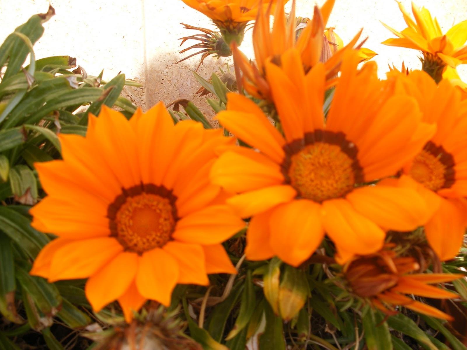 El huerto de ram n flores de plantas ornamentales for Que son plantas ornamentales