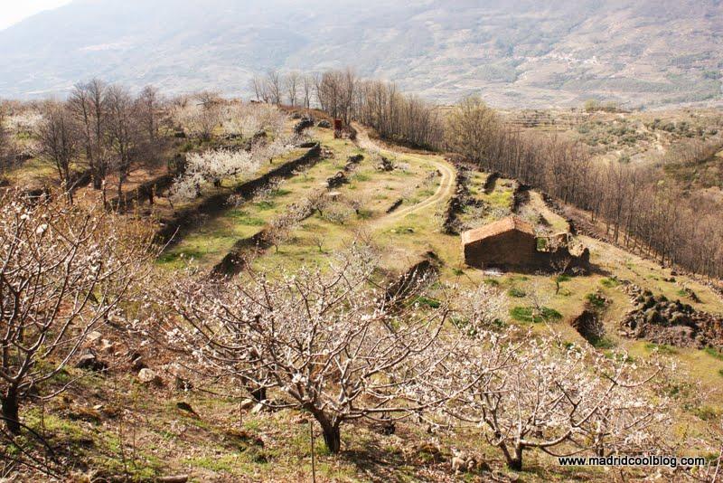 MADRID COOL BLOG valle del jerte floración de los cerezos hanami cáceres florecidos marzo abril