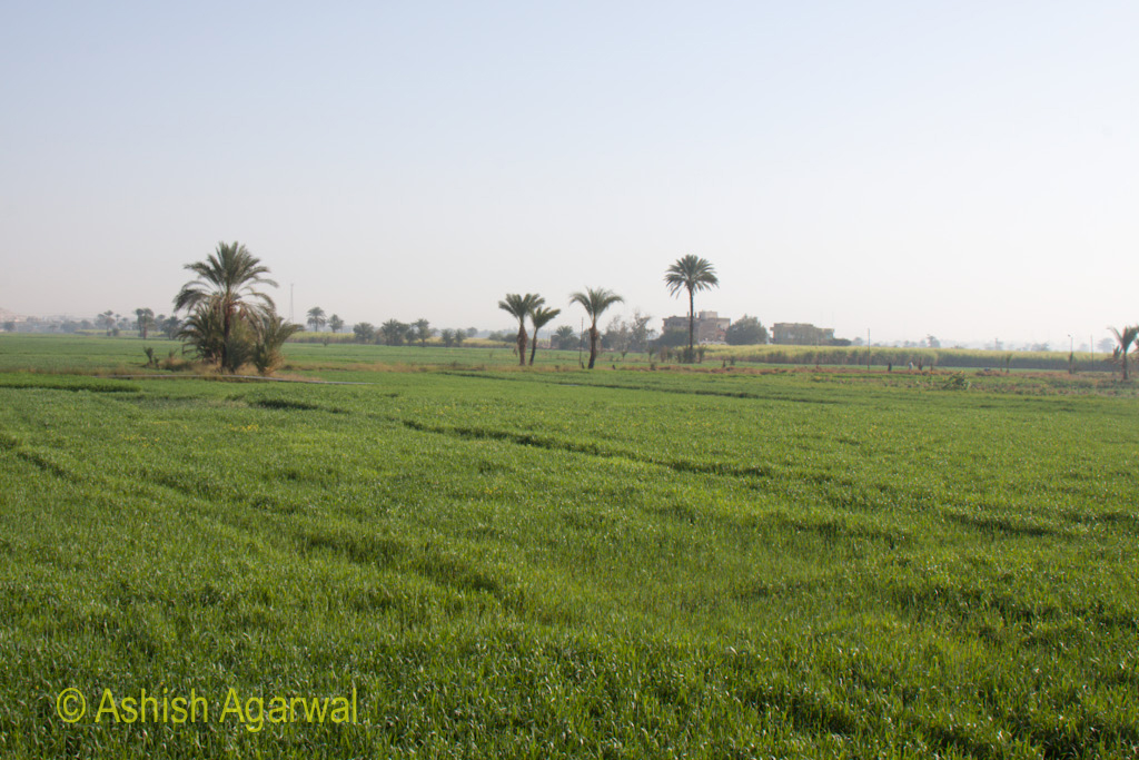 Green fields close to the Valley of Kings in Egypt