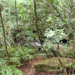 Crossing Lovers Jump Creek (117280)