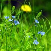Что значит трава во сне