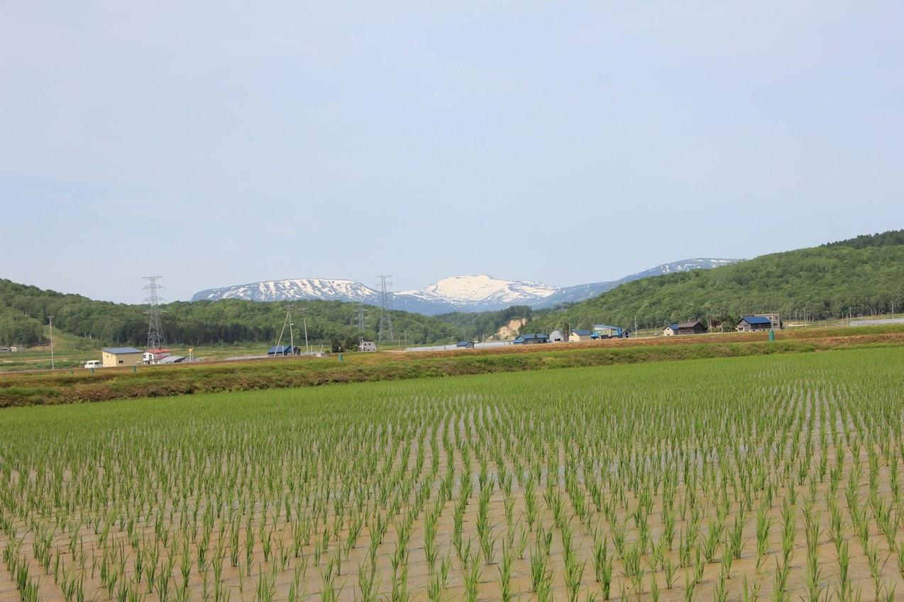 新緑と暑寒岳2