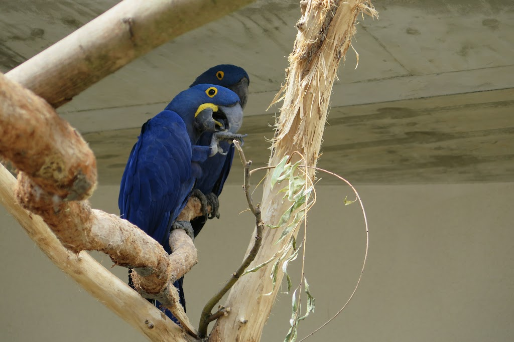 Papageien in allen erdenklichen Farben sind zu finden