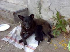 cagna e cucciolo
