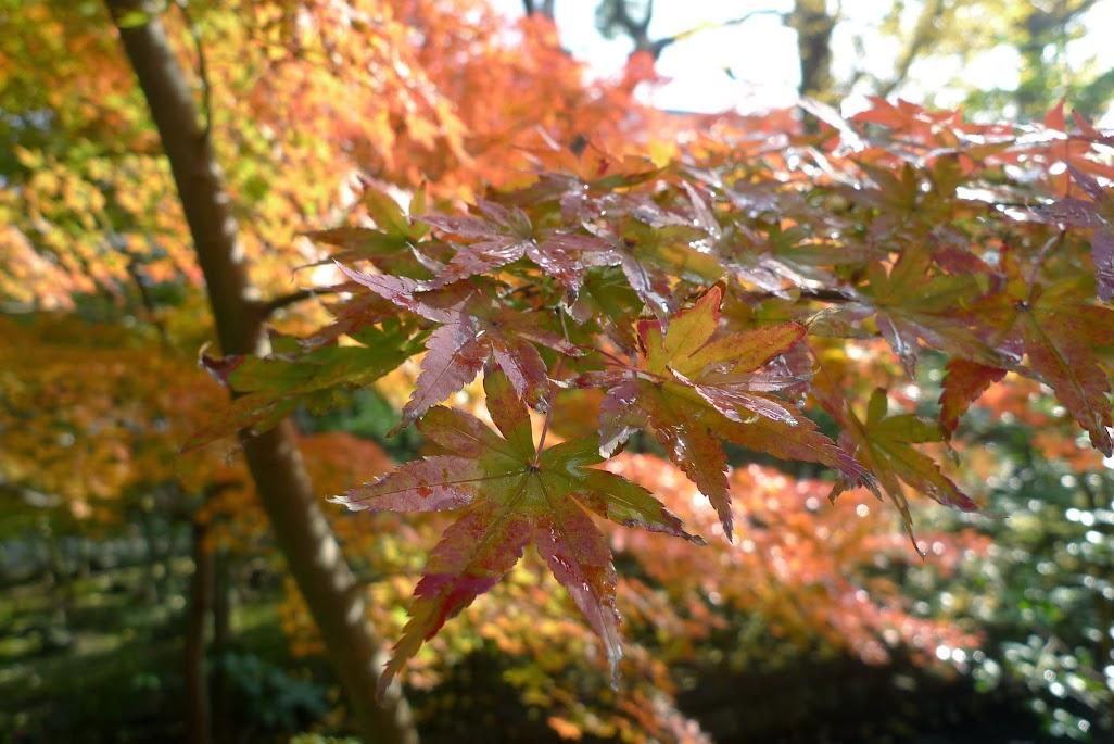 automne kamakura