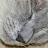 Amy Plank avatar image