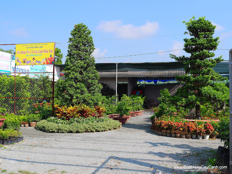 Cửa Hàng Cây Cảnh Minh Tân 3
