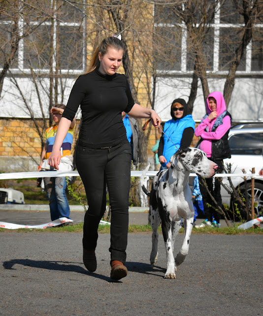 Кубок Аризоны-14(ПК)+ЧРКФ, Красноярск, 27 апреля 2014 DSC_5640
