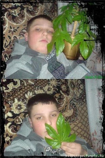 wannabe gangsta with house plant
