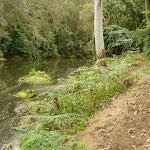 Sandy track beside Berowra Creek (328973)