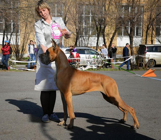 Кубок Аризоны-14(ПК)+ЧРКФ, Красноярск, 27 апреля 2014 DSC_5862