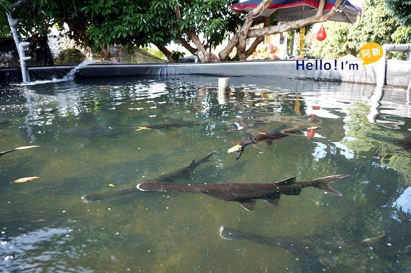 彰化員林餐廳,沙里仙鱘龍魚餐廳-3