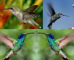 pájaros como atraerlos