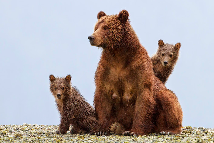 Disneynature Bears #MeetTheCubs #DisneynatureBears
