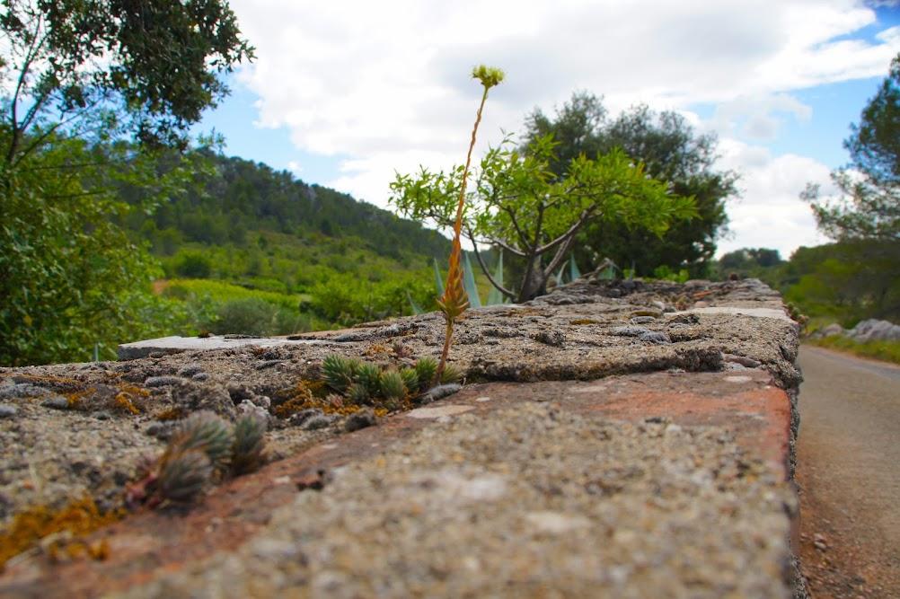 Лангедок - розэ, сыр и горы