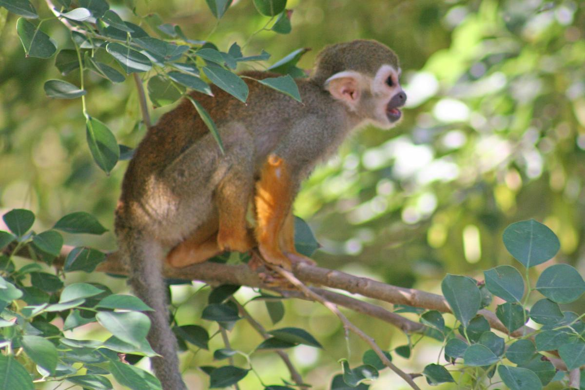 world animal beauti and funny spider monkey