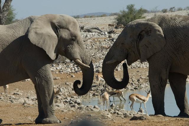 أفضل ما في أفريقيا  Best of Africa Namibia_180807143725
