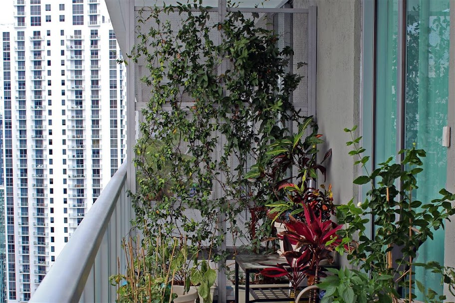 Balcony vines living screen