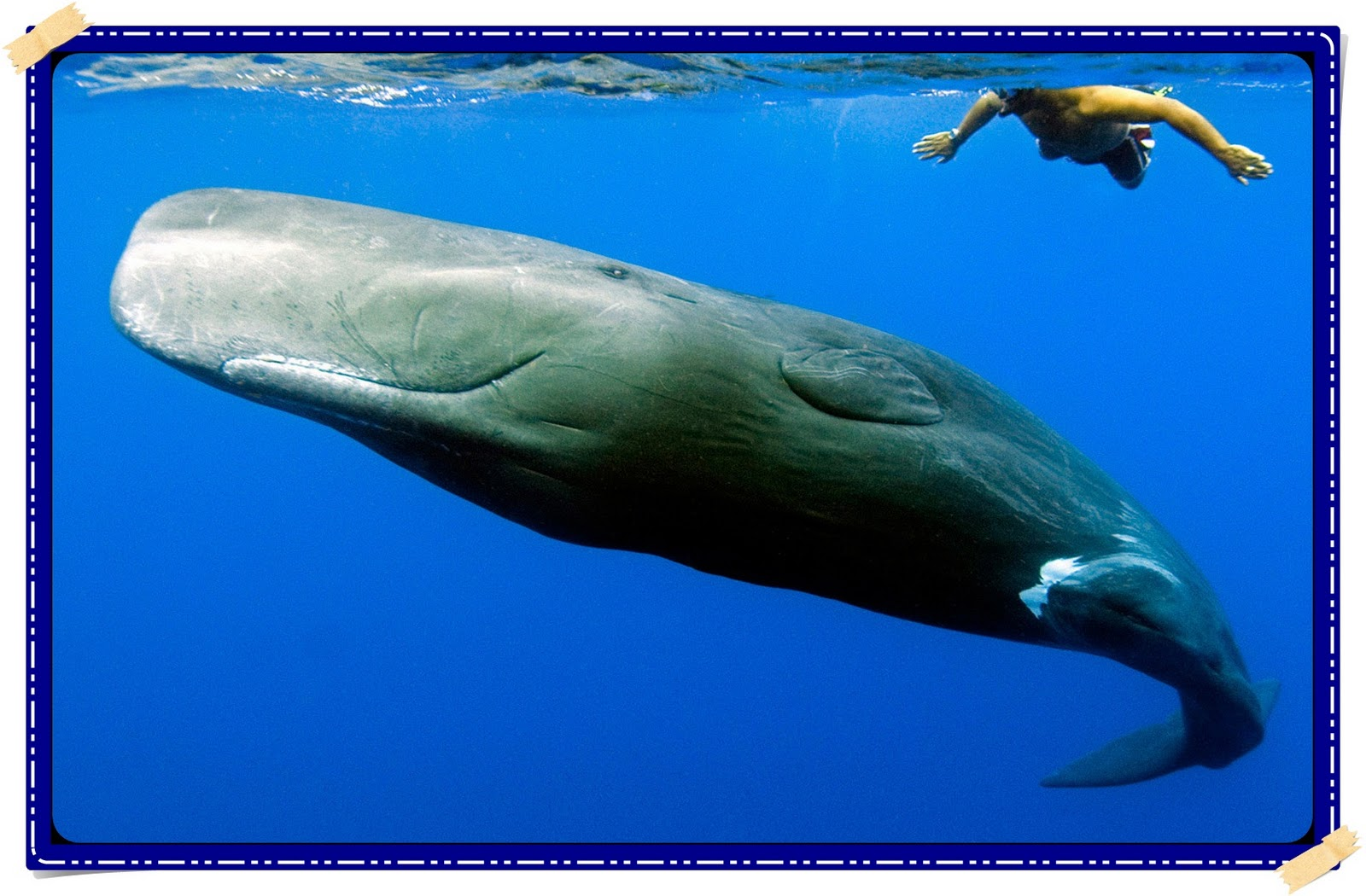 witty nity whale the biggest of all animals