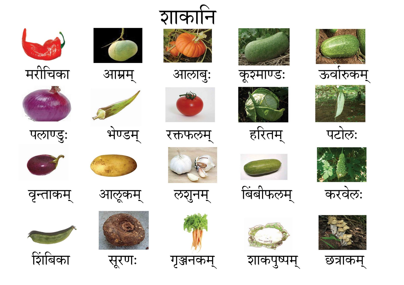 Vegetable Names Vegetables names in sanskrit