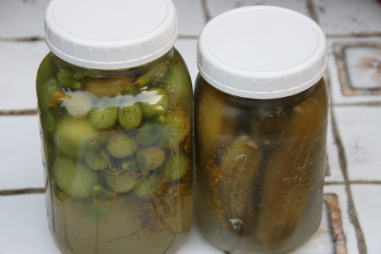 Green tomato pickles and dill pickles. Both wild lactofermented.