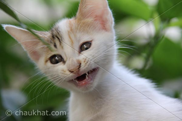 Photo of kitten - Angry