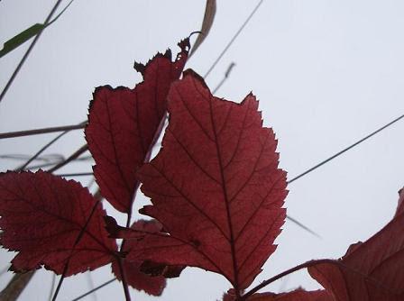 осень в Сербии