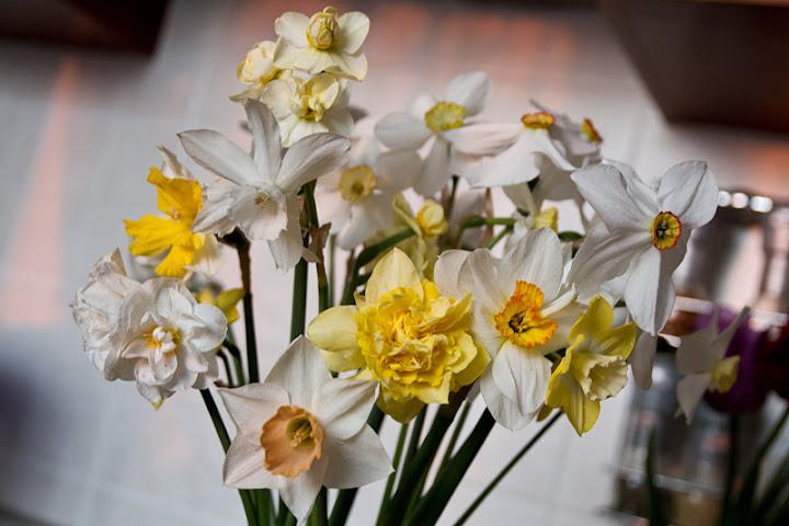 должна картинка цветы ландыши нарциссы лилии покрошила лист пекинской