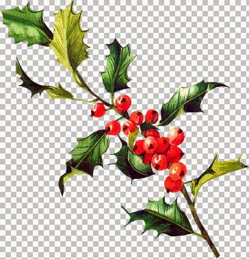 AMT~Poinsettia2sm_KK.jpg