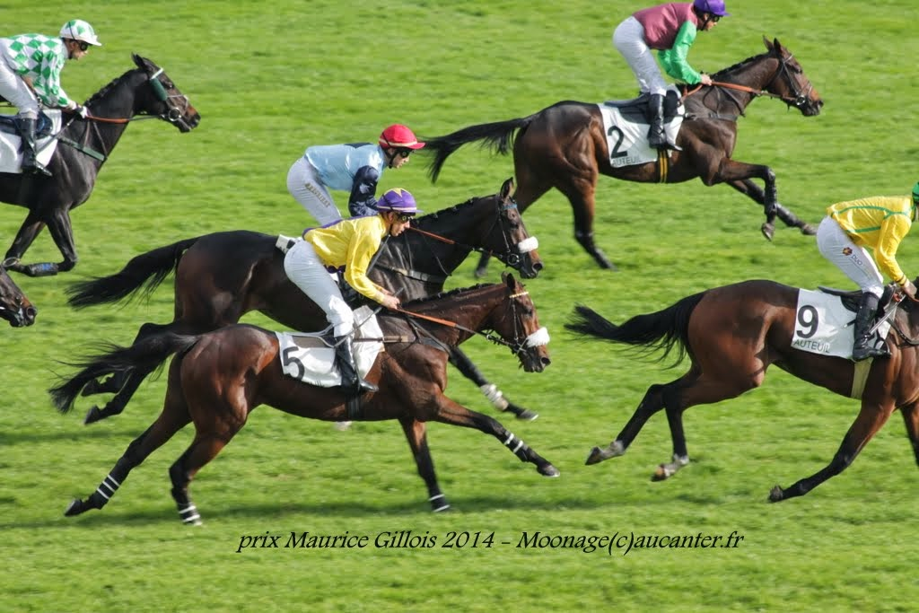 Photos Auteuil 2-11-2014 (48h de l'obstacle) IMG_5463