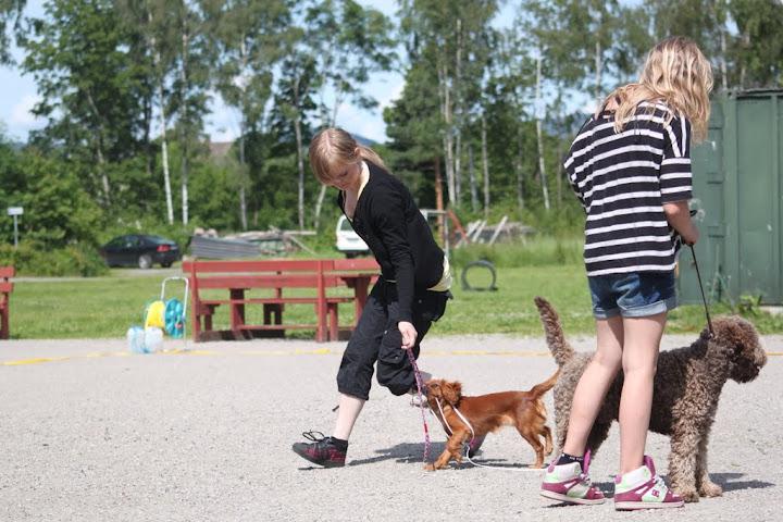 Penny forstyrrer Zalto - Foto: Inga R.
