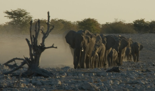 أفضل ما في أفريقيا  Best of Africa Namibia_180807171903%252520%2525281%252529