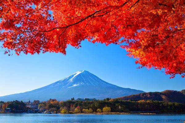 lá rụng tuyệt đẹp