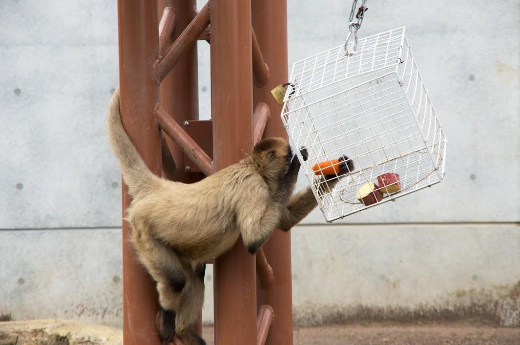 自由に動きまわる猿