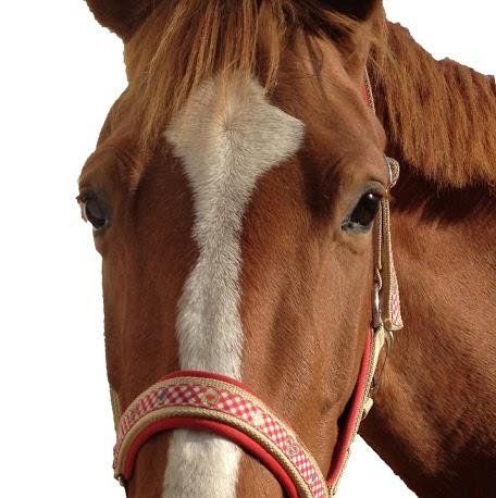 Stefanie Lang (Horse-Magic)