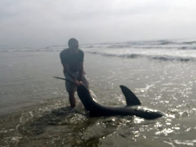 U.S. Marine wrestles great white shark to shore