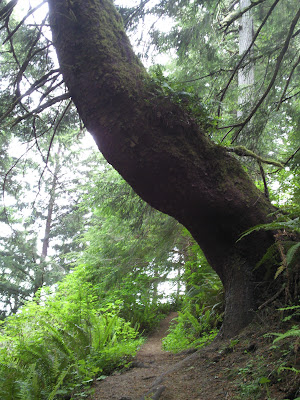 Cool tree on the trail