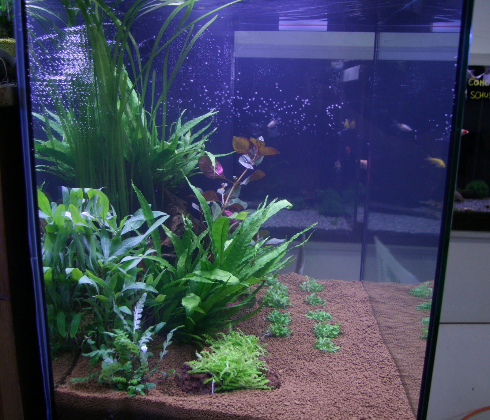 fishroom benjy sub aquascape pour d butant. Black Bedroom Furniture Sets. Home Design Ideas