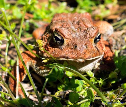 Toad-2014-06-8-21-13.jpg