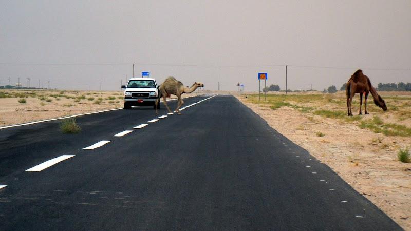 Kuwait 2006