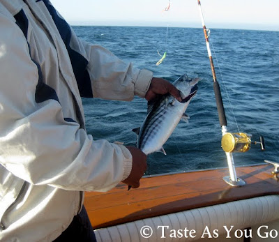 Freshly-Caught Bonito in Los Cabos, Mexico - Photo by Michelle Judd of Taste As You Go
