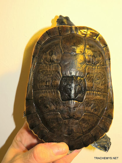 mes tortues (BK) - Page 12 IMG_4484