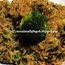 Risotto di basmati e riso selvaggio ai funghi porcini e broccoli