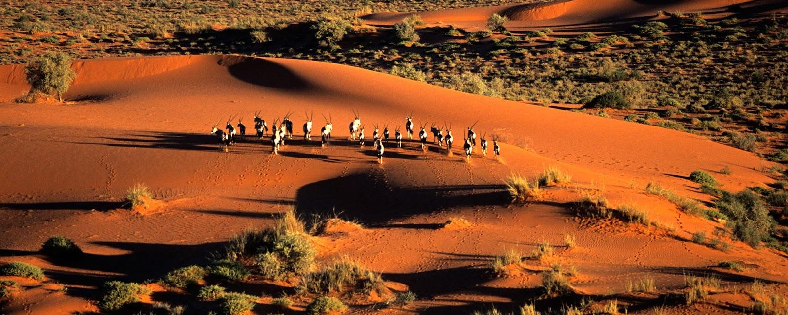 Kalahari Botwana - TCS world travel.jpg