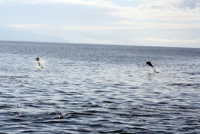 Esses magnificos Cetacios -  Cachalotes - Golfinhos etc IMG_1396