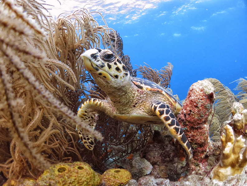 Photo Blog Of Our Day In Bonaire Cruise Critic Message Board Forums